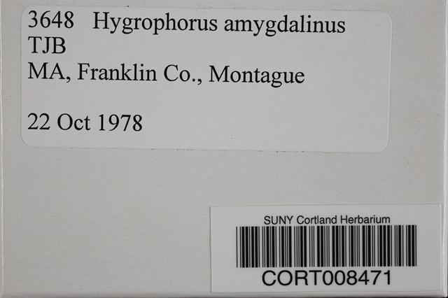 Image of Hygrophorus amygdalinus