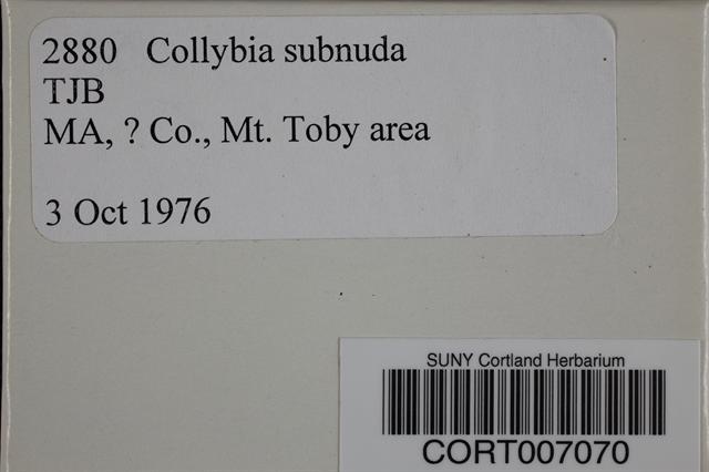 Collybia subnuda image