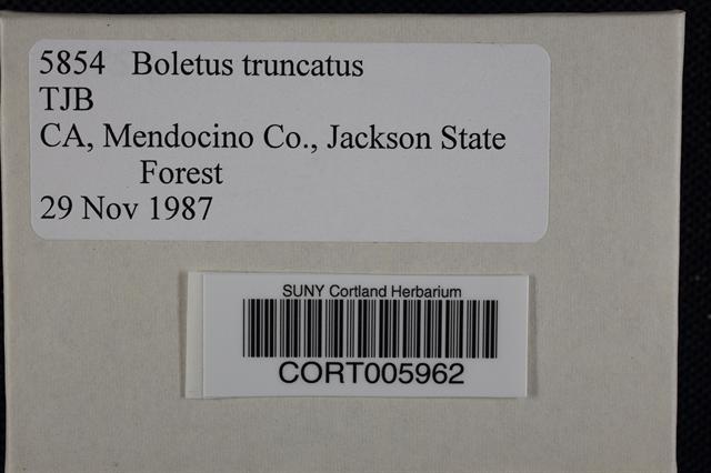 Boletus truncatus image