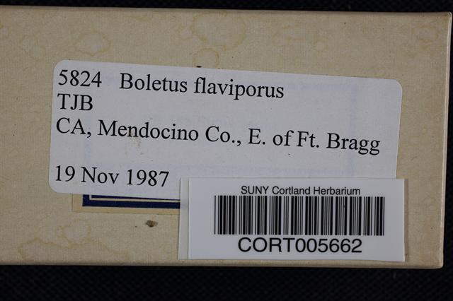 Boletus flaviporus image
