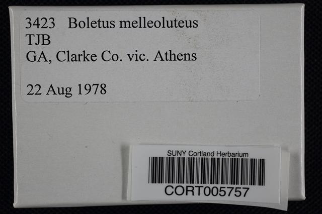 Image of Pulveroboletus melleoluteus