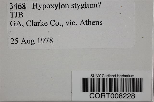 Hypoxylon stygium image