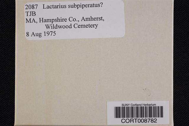 Image of Lactarius subpiperatus