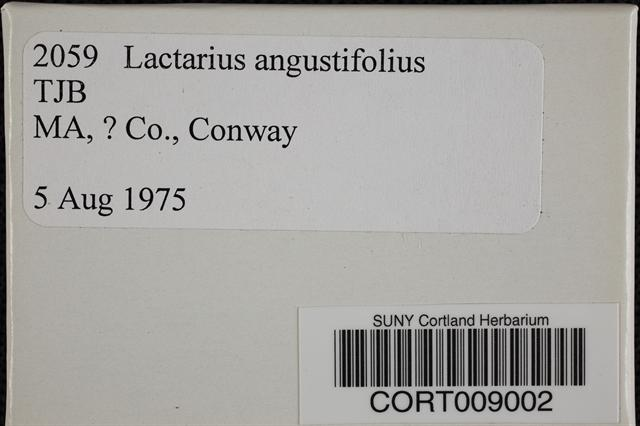 Image of Lactarius angustifolius
