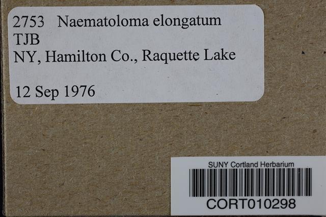 Hypholoma elongatum image