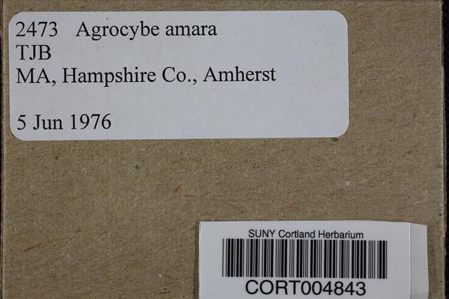 Image of Agrocybe amara