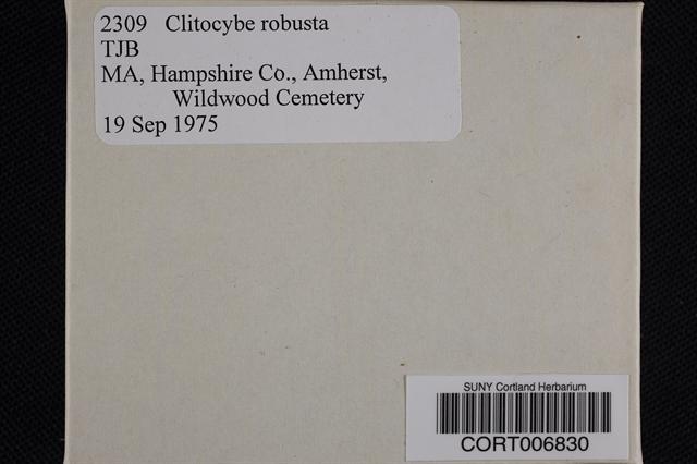 Clitocybe robusta image