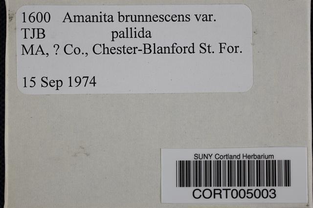 Amanita brunnescens var. pallida image