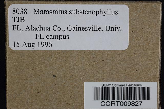 Image of Marasmius substenophyllus
