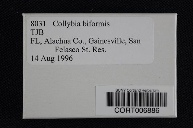 Collybia biformis image