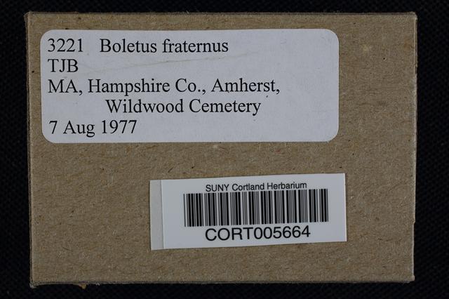 Boletus fraternus image