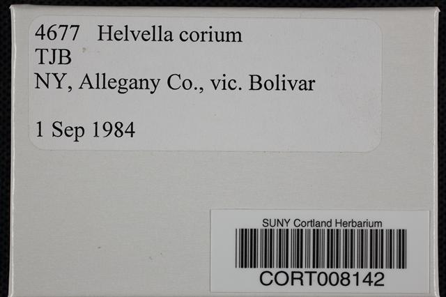 Helvella corium image