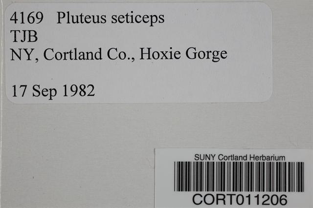 Pluteus podospileus image