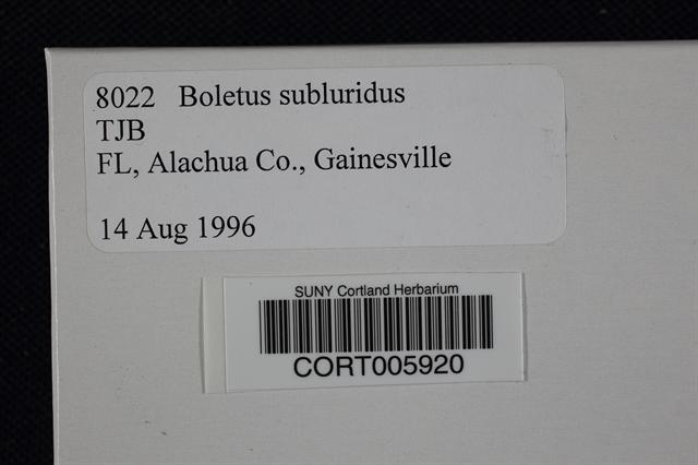 Image of Boletus subluridus