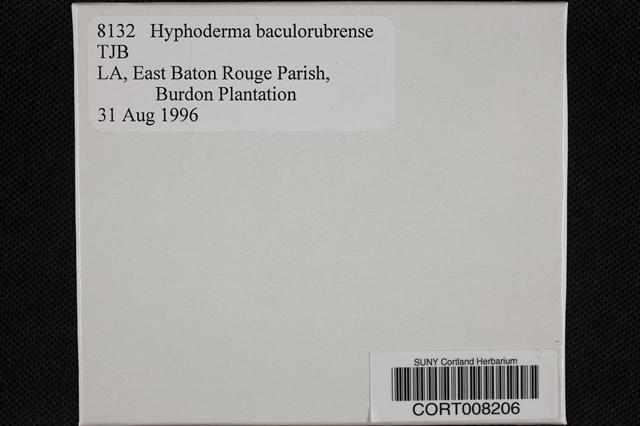 Hyphoderma image