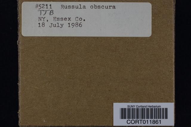 Image of Russula obscura