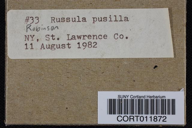 Russula pusilla image
