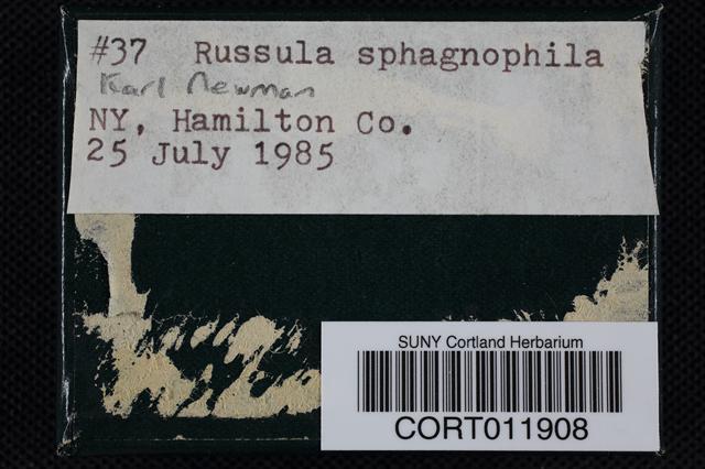 Russula sphagnophila image