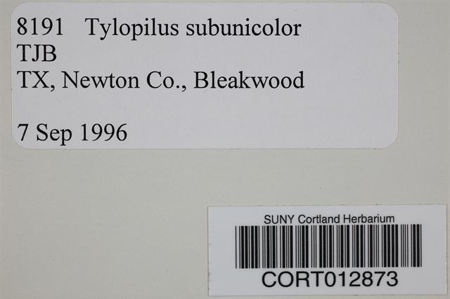 Image of Tylopilus subunicolor