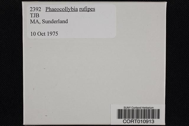 Phaeocollybia rufipes image