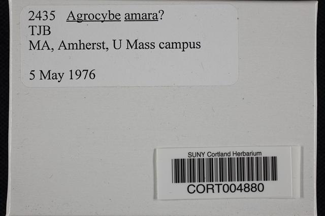 Agrocybe amara image