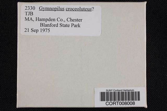 Gymnopilus croceoluteus image