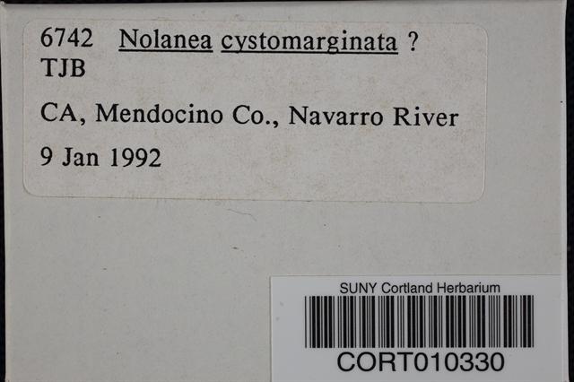 Image of Nolanea cystomarginata
