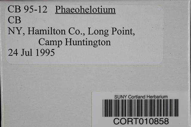 Phaeohelotium image