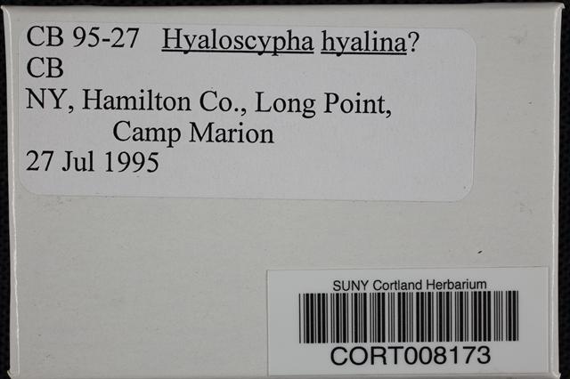 Hyaloscypha image