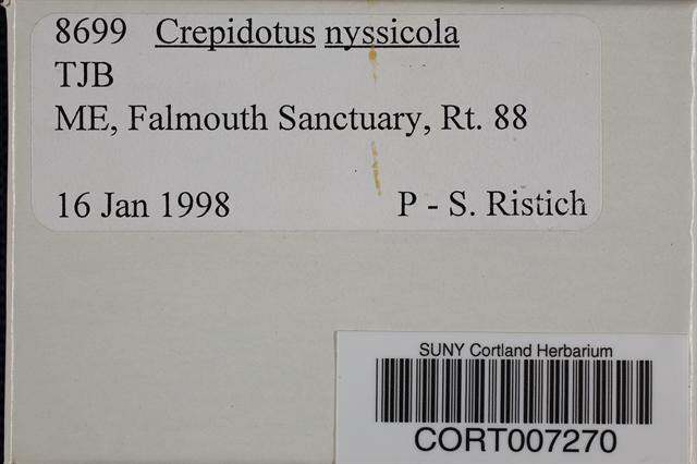 Image of Crepidotus nyssicola