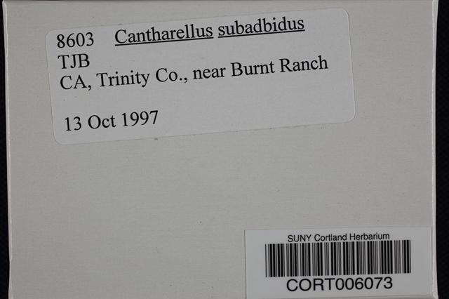 Image of Cantharellus subalbidus