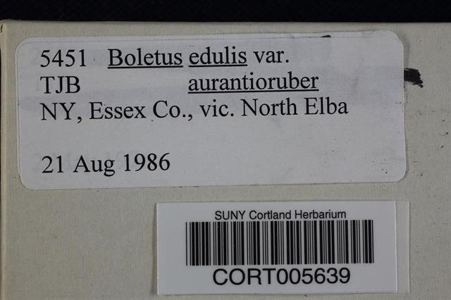 Image of Boletus aurantioruber