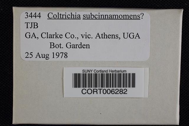 Image of Coltricia pseudocinnamomea