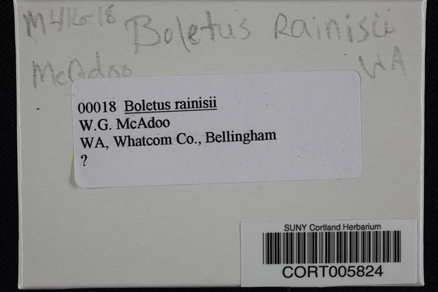 Image of Boletus rainisii