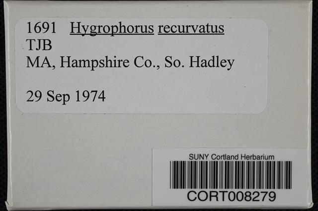 Hygrophorus recurvatus image