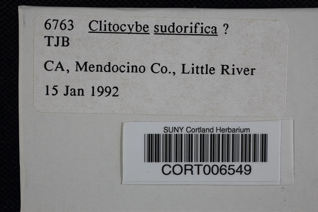 Image of Clitocybe sudorifica