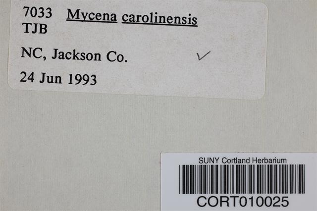 Mycena carolinensis image