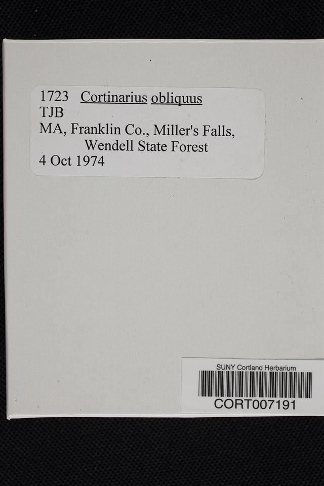 Cortinarius obliquus image