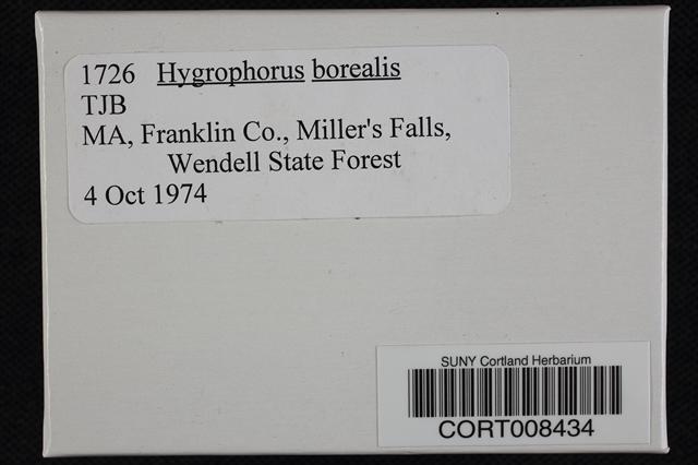 Hygrophorus borealis image
