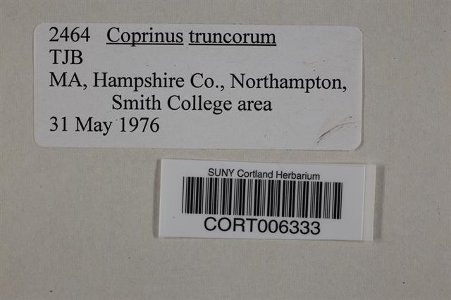 Coprinellus truncorum image