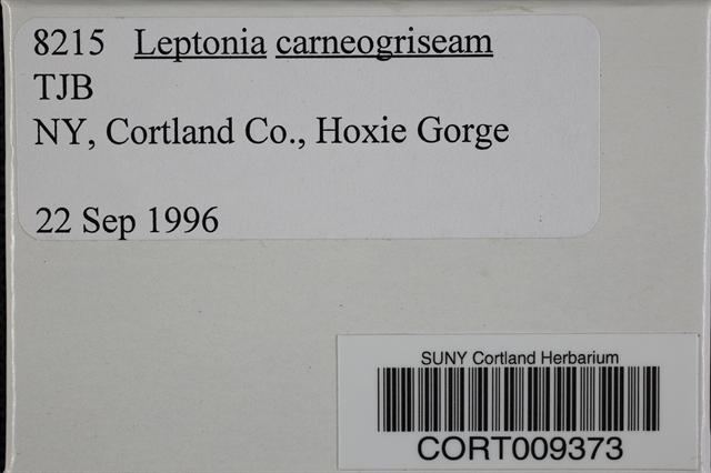 Image of Entoloma carneogriseum