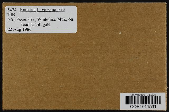Image of Ramaria flavosaponaria