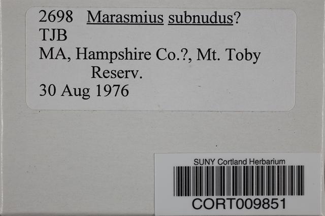 Image of Marasmius subnudus