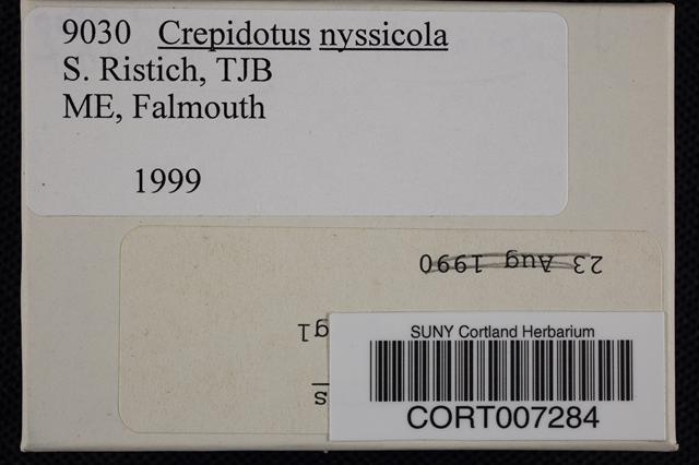 Crepidotus nyssicola image