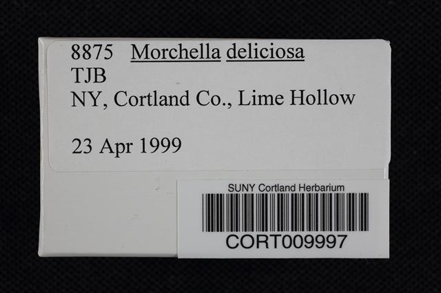 Image of Morchella deliciosa