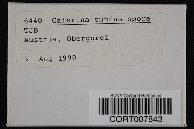 Image of Galerina subfusispora