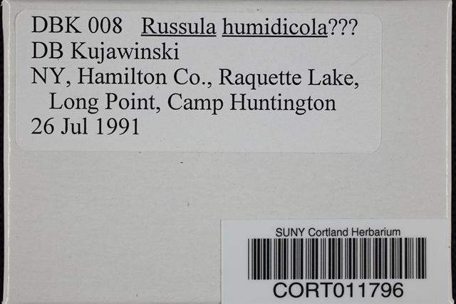 Image of Russula humidicola