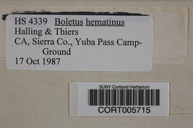 Image of Boletus haematinus