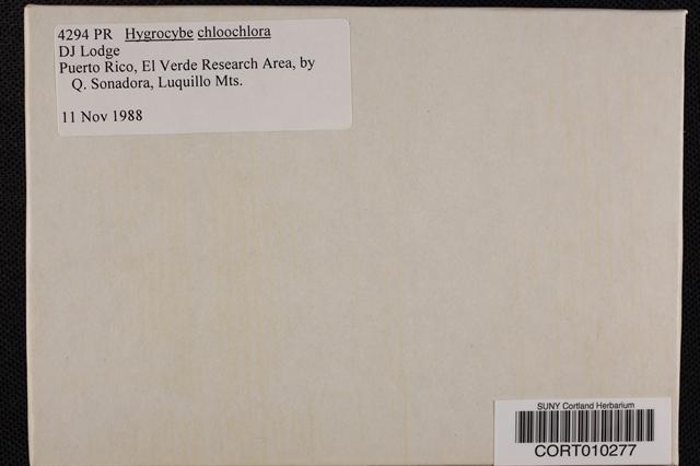 Hygrocybe chloochlora image