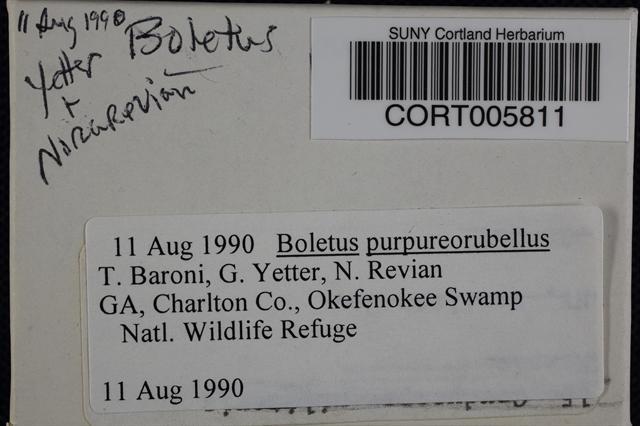 Image of Boletus purpureorubellus